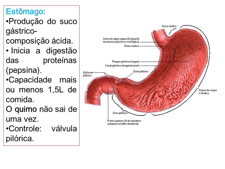 Fantástico Válvula Pilórica Festooning - Imágenes de Anatomía Humana ...