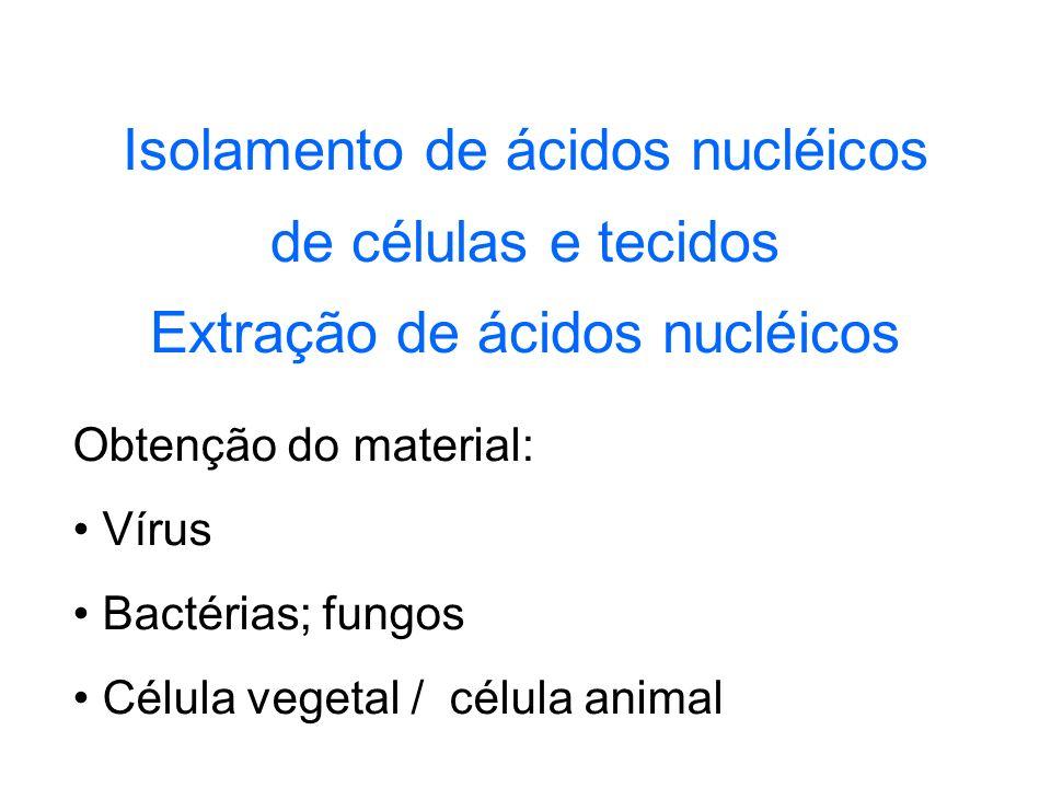 Isolamento de ácidos nucléicos de células e tecidos Extração de ácidos nucléicos