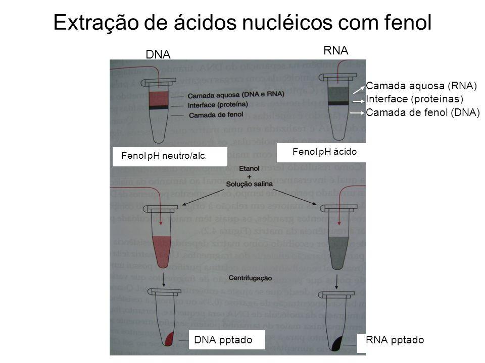Extração de ácidos nucléicos com fenol