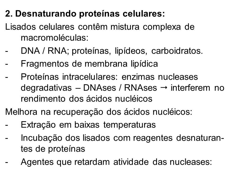 2. Desnaturando proteínas celulares: