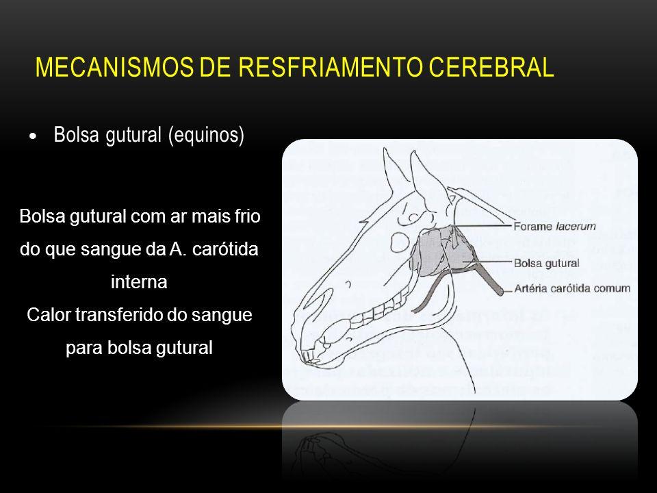 Vistoso Anatomía Bolsa Gutural Viñeta - Anatomía de Las Imágenesdel ...
