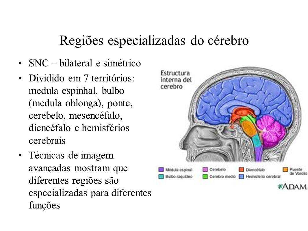 Osso parietal osso frontal osso occipital osso temporal for O osso esterno e dividido em