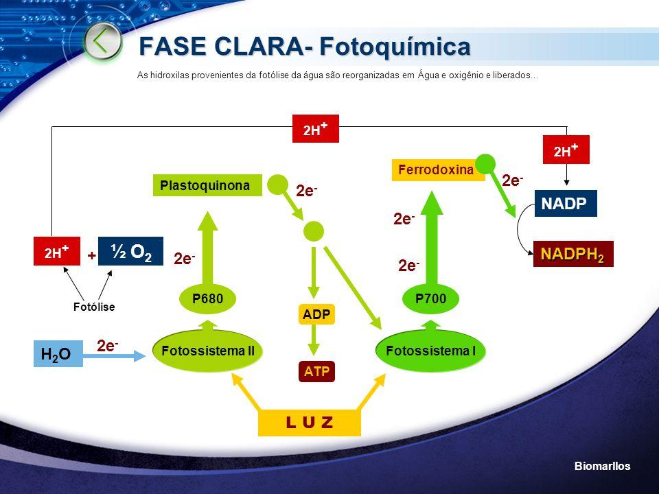 FASE CLARA- Fotoquímica