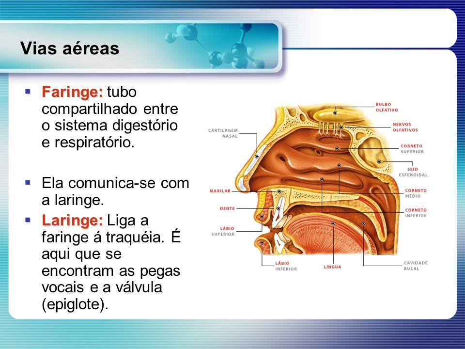 Vias aéreas Faringe: tubo compartilhado entre o sistema digestório e respiratório. Ela comunica-se com a laringe.
