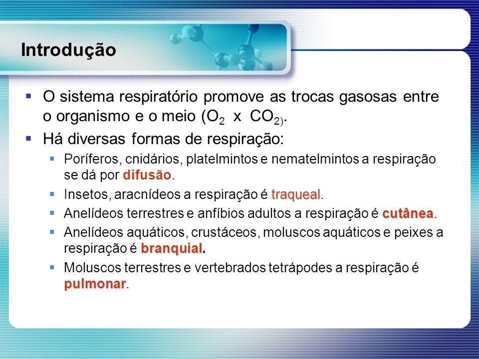 Introdução O sistema respiratório promove as trocas gasosas entre o organismo e o meio (O2 x CO2).