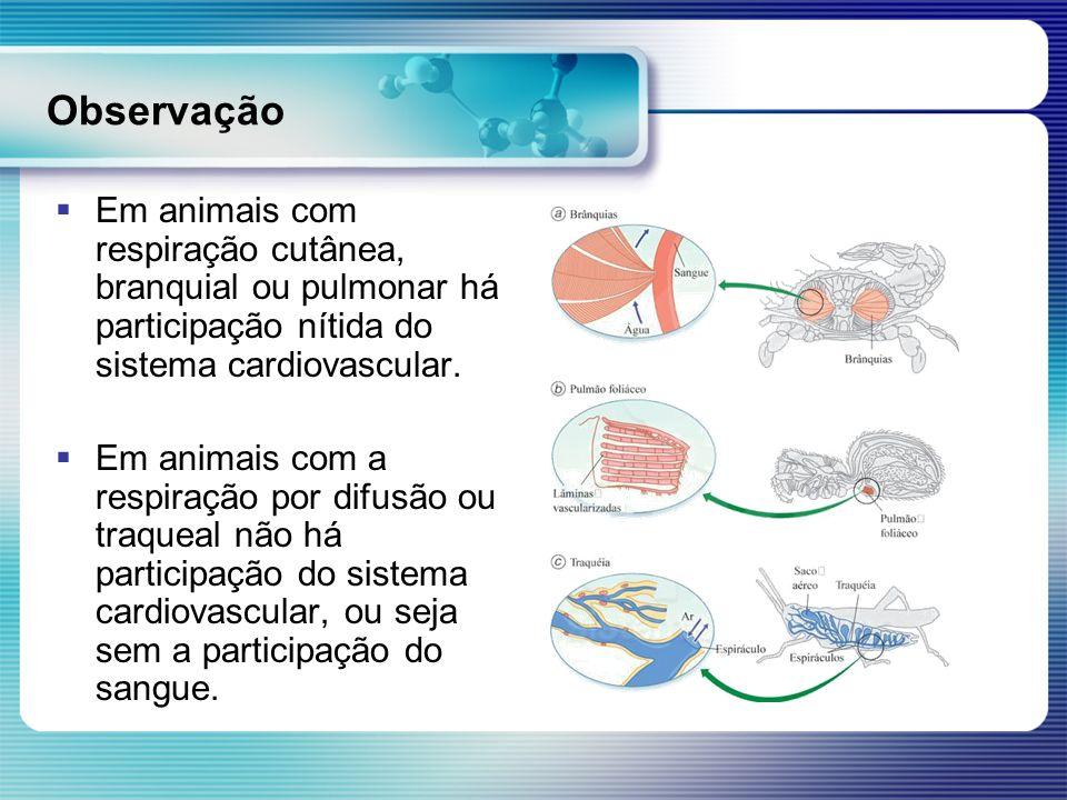 Observação Em animais com respiração cutânea, branquial ou pulmonar há participação nítida do sistema cardiovascular.