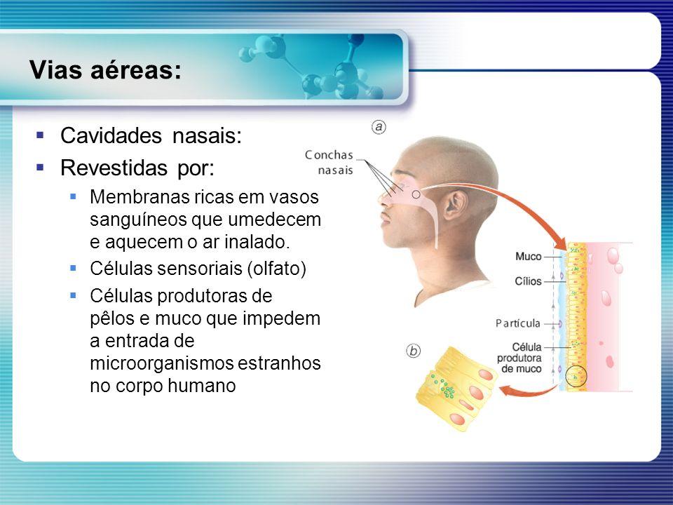 Vias aéreas: Cavidades nasais: Revestidas por: