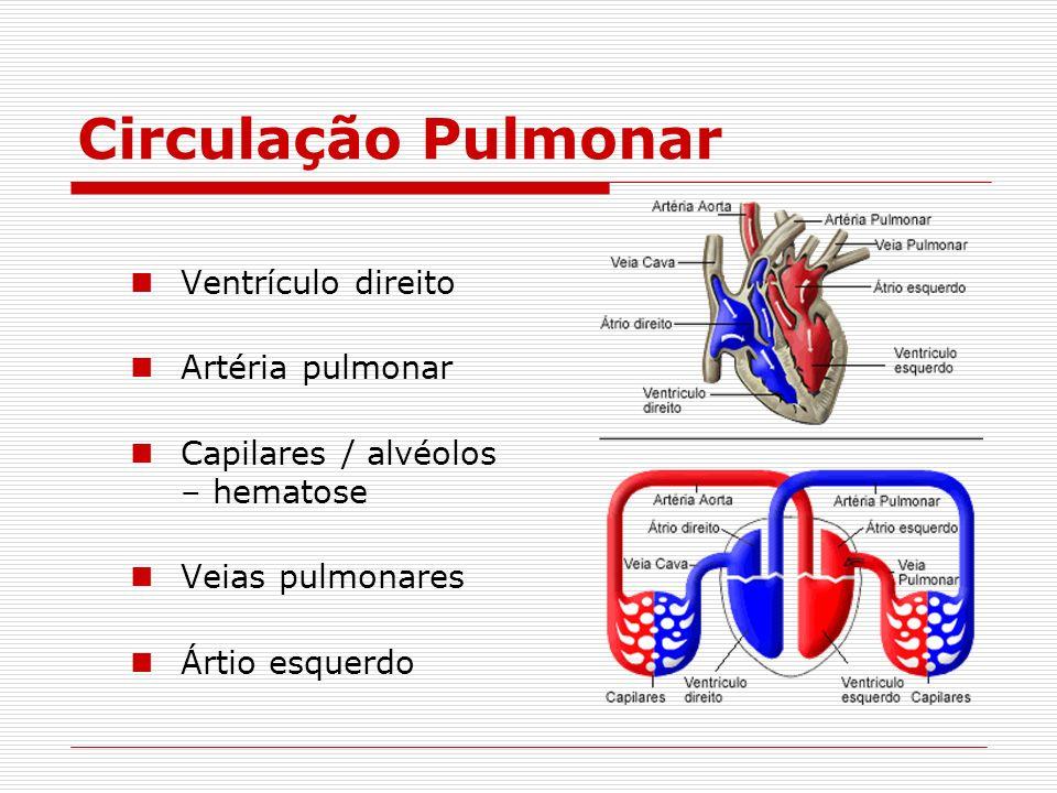 Circulação Pulmonar Ventrículo direito Artéria pulmonar