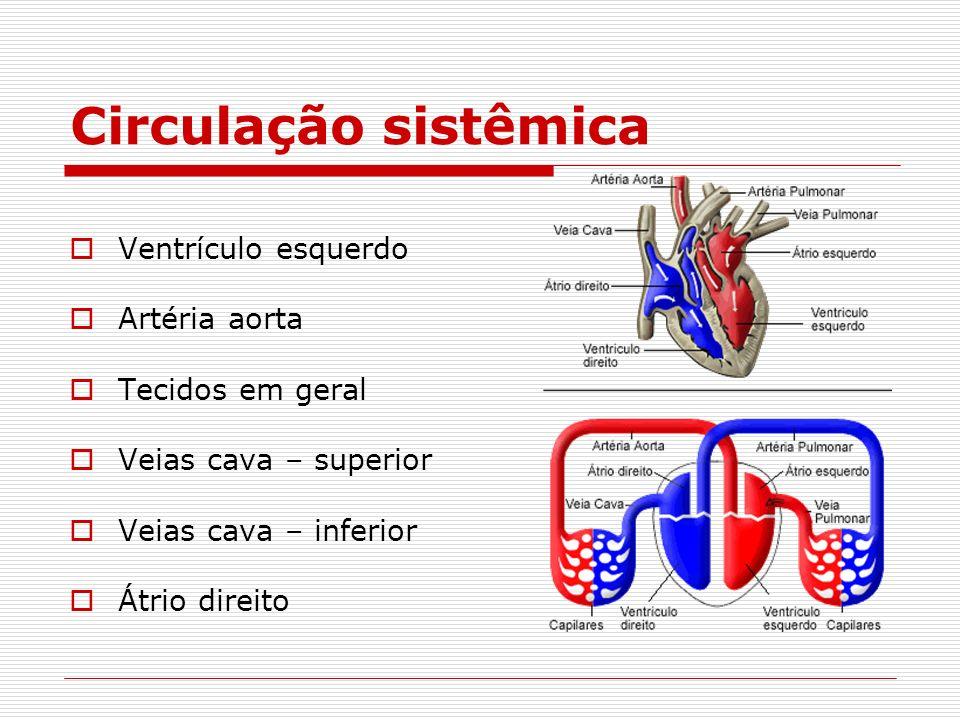 Circulação sistêmica Ventrículo esquerdo Artéria aorta