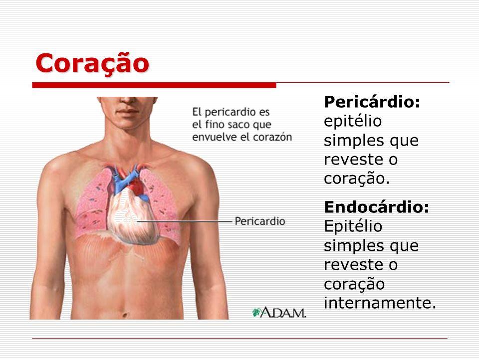 Coração Pericárdio: epitélio simples que reveste o coração.