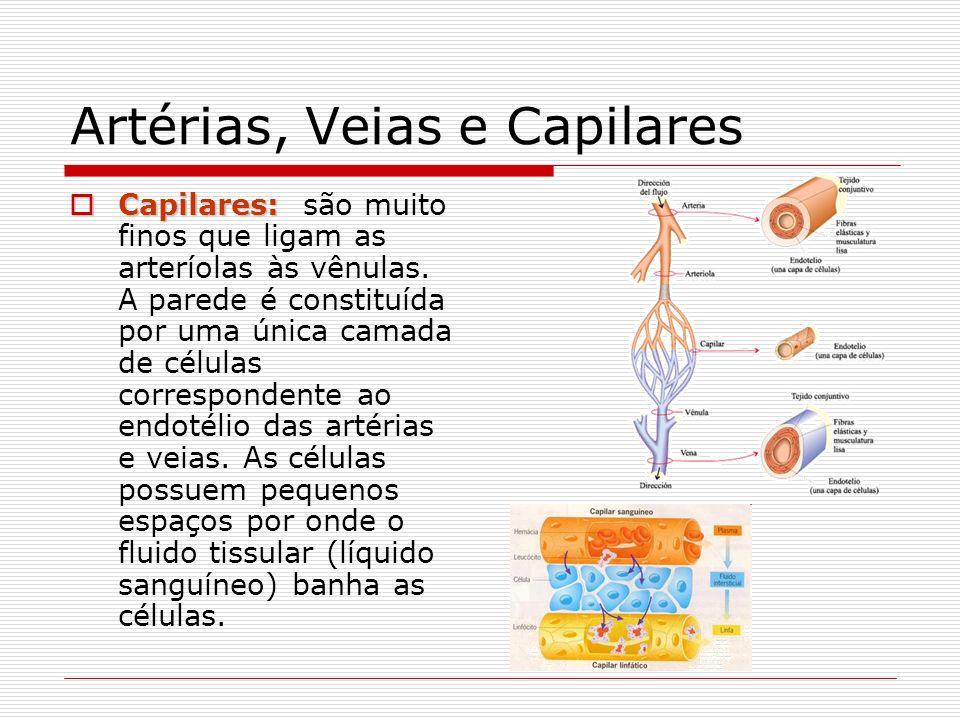 Artérias, Veias e Capilares