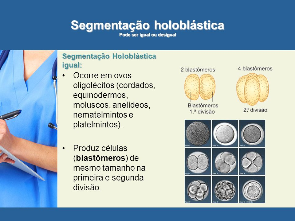 Segmentação holoblástica Pode ser igual ou desigual