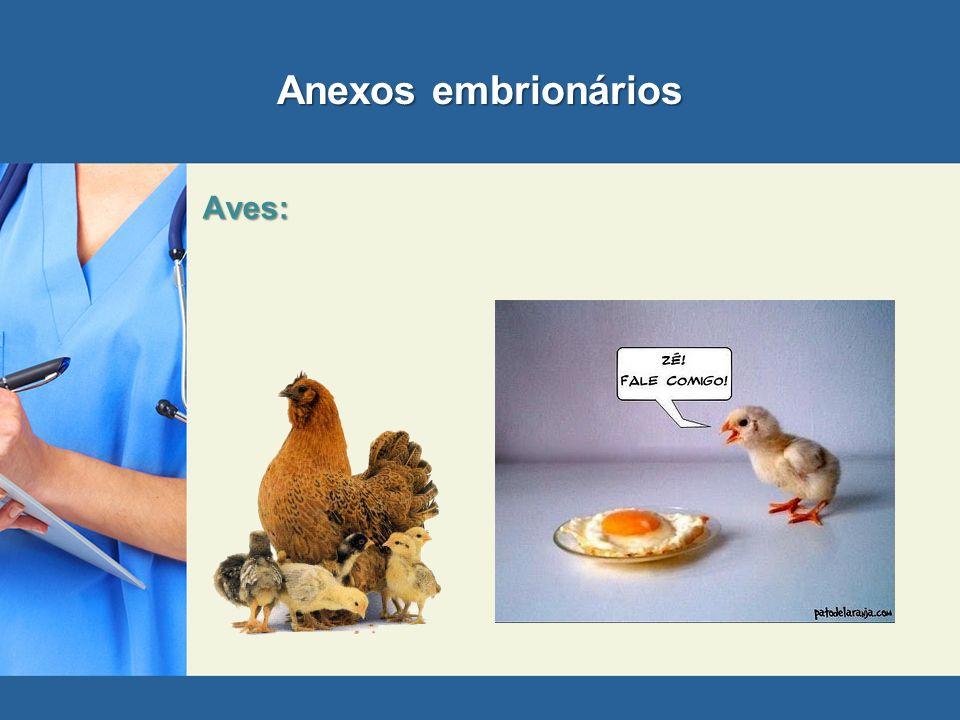 Anexos embrionários Aves: