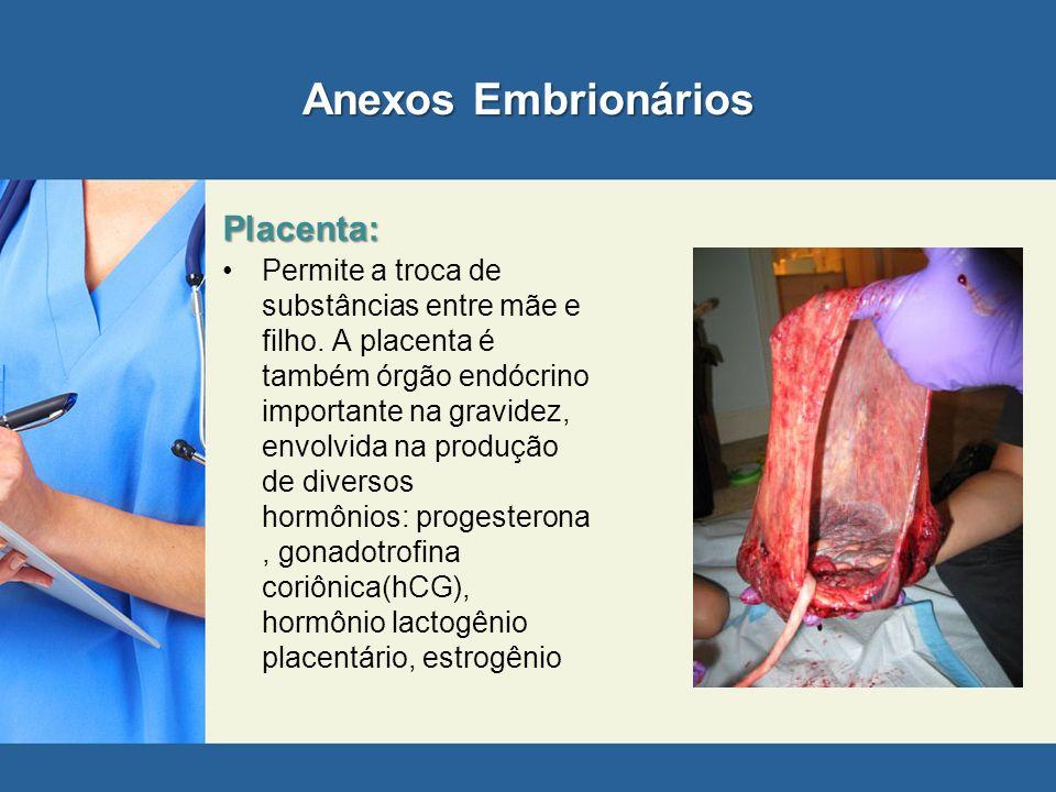 Anexos Embrionários Placenta: