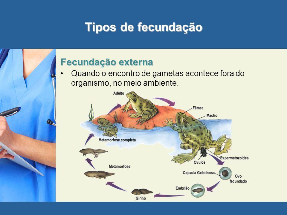 Tipos de fecundação Fecundação externa
