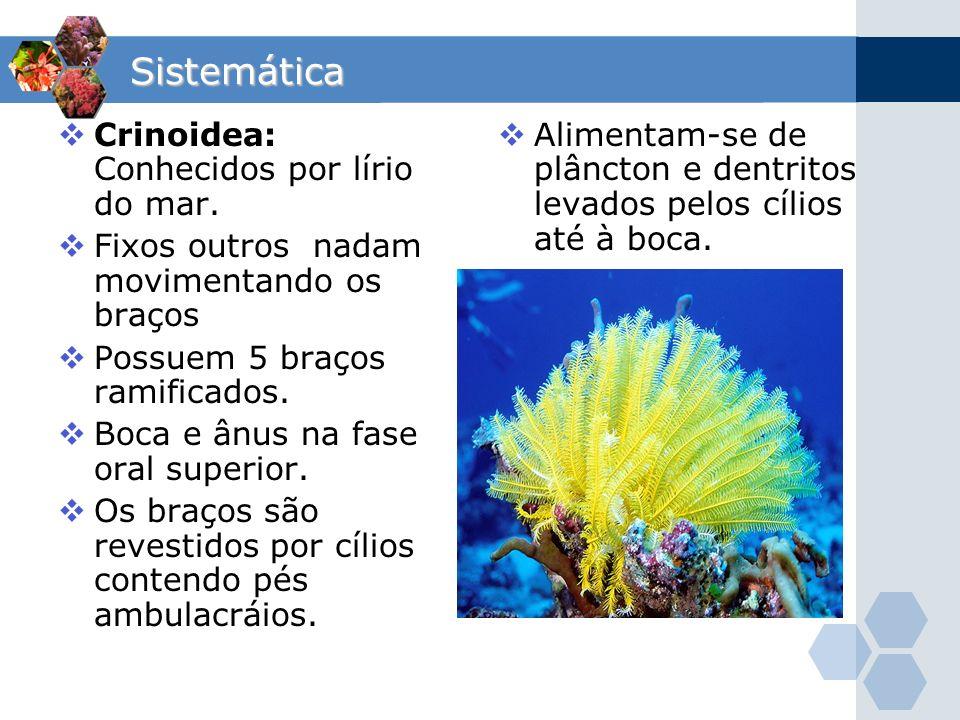 Sistemática Crinoidea: Conhecidos por lírio do mar.