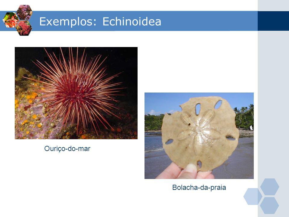 Exemplos: Echinoidea Ouriço-do-mar Bolacha-da-praia