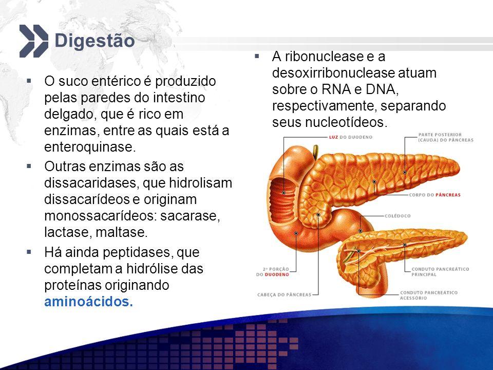 Digestão A ribonuclease e a desoxirribonuclease atuam sobre o RNA e DNA, respectivamente, separando seus nucleotídeos.