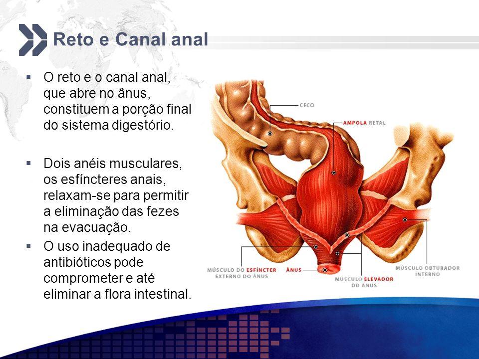 Reto e Canal anal O reto e o canal anal, que abre no ânus, constituem a porção final do sistema digestório.
