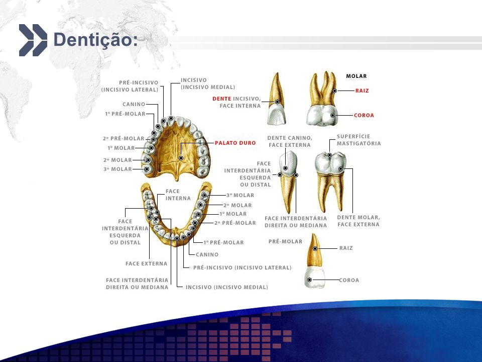 Dentição: