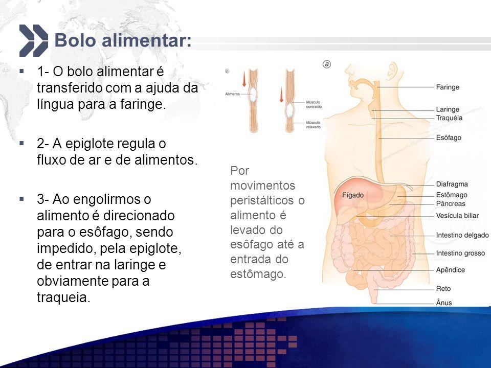 Bolo alimentar: 1- O bolo alimentar é transferido com a ajuda da língua para a faringe. 2- A epiglote regula o fluxo de ar e de alimentos.