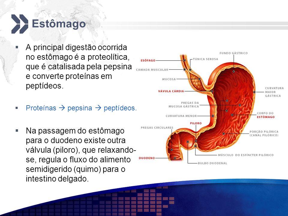 Estômago A principal digestão ocorrida no estômago é a proteolítica, que é catalisada pela pepsina e converte proteínas em peptídeos.