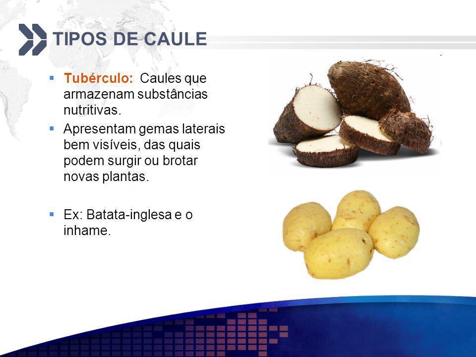 TIPOS DE CAULE Tubérculo: Caules que armazenam substâncias nutritivas.