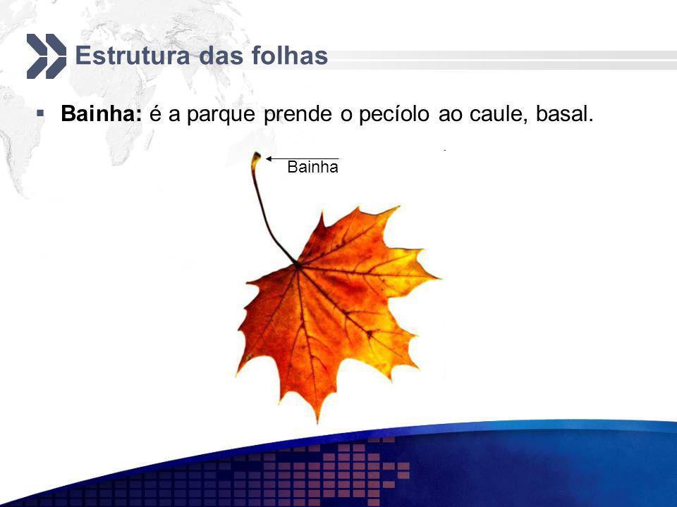 Estrutura das folhas Bainha: é a parque prende o pecíolo ao caule, basal. Bainha