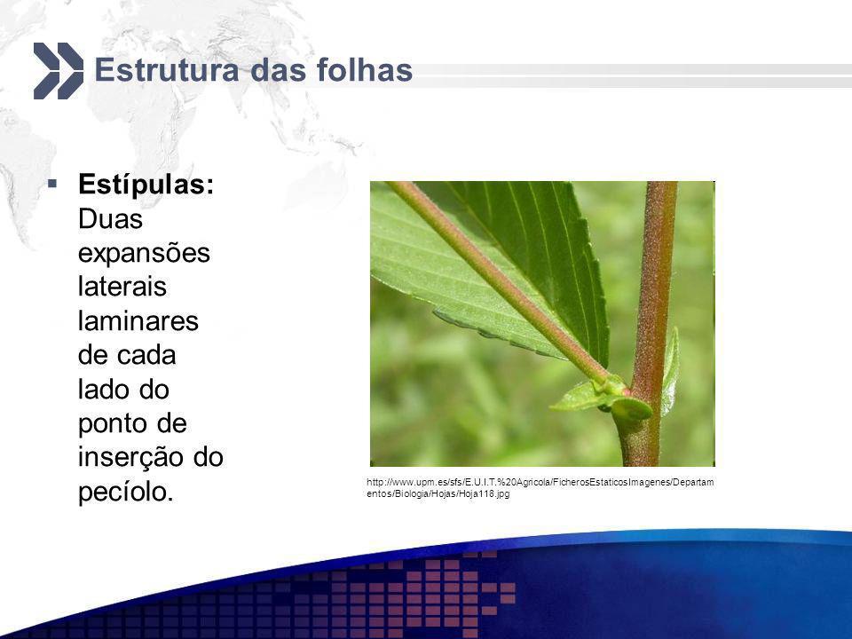Estrutura das folhas Estípulas: Duas expansões laterais laminares de cada lado do ponto de inserção do pecíolo.