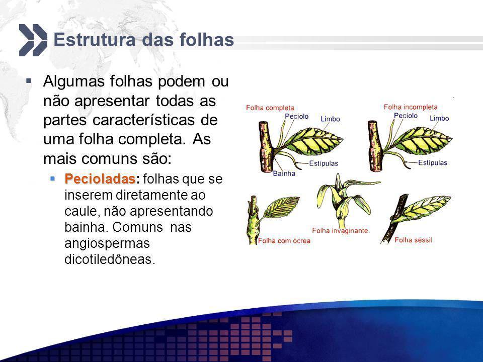 Estrutura das folhas Algumas folhas podem ou não apresentar todas as partes características de uma folha completa. As mais comuns são:
