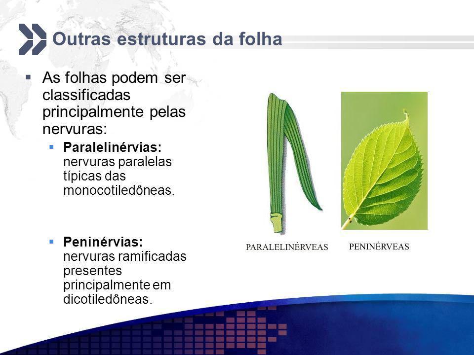 Outras estruturas da folha
