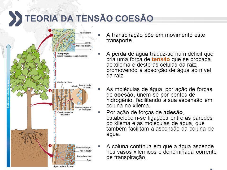 TEORIA DA TENSÃO COESÃO