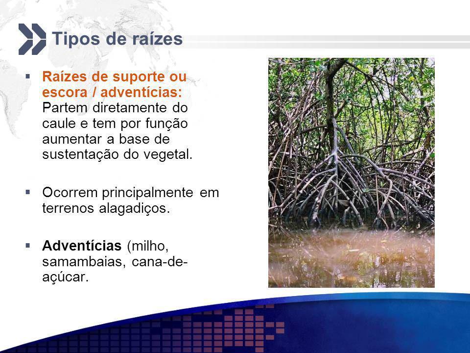 Tipos de raízes Raízes de suporte ou escora / adventícias: Partem diretamente do caule e tem por função aumentar a base de sustentação do vegetal.