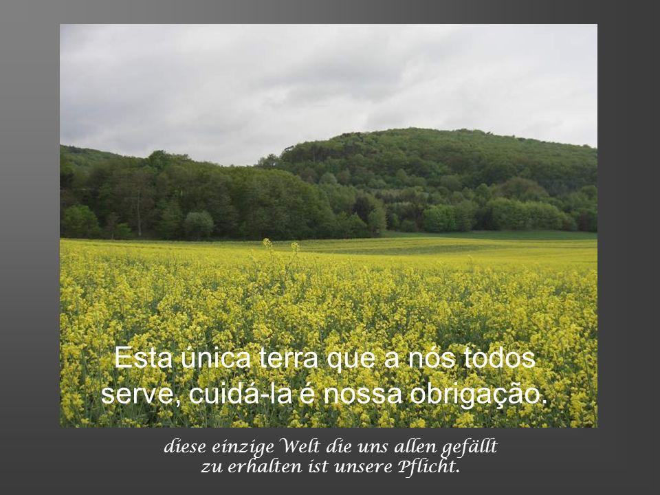 Esta única terra que a nós todos serve, cuidá-la é nossa obrigação.