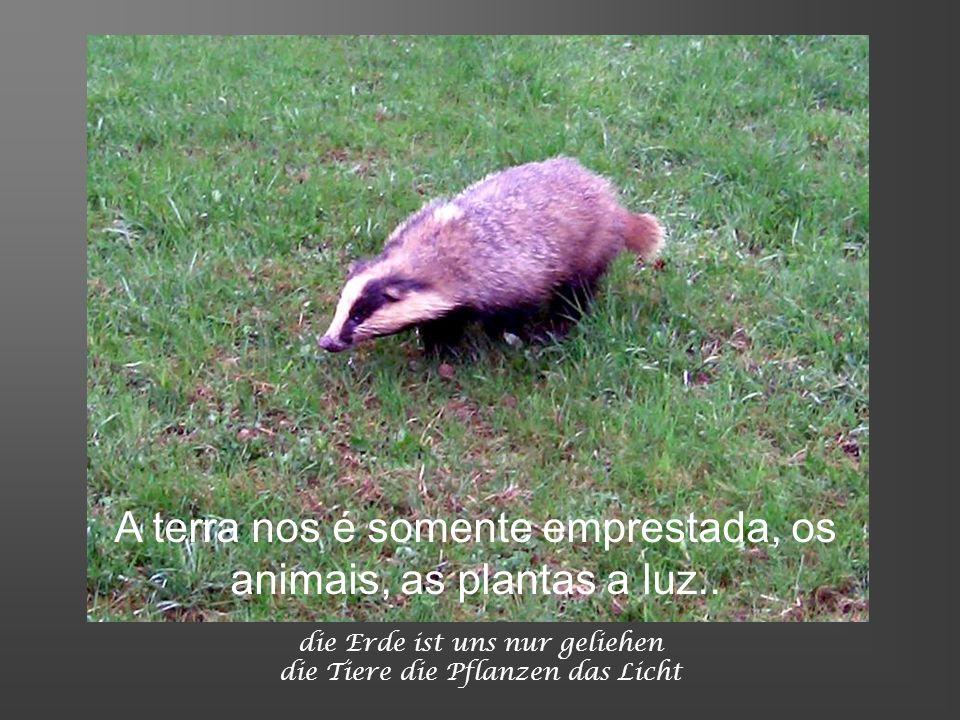 A terra nos é somente emprestada, os animais, as plantas a luz..