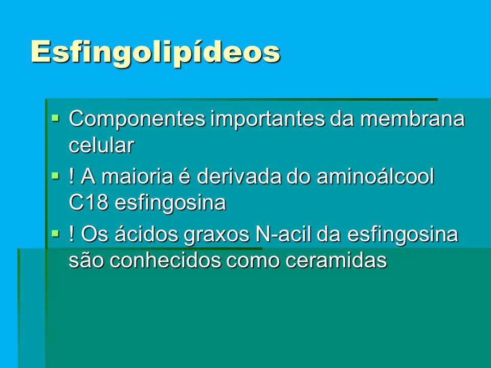 Esfingolipídeos Componentes importantes da membrana celular