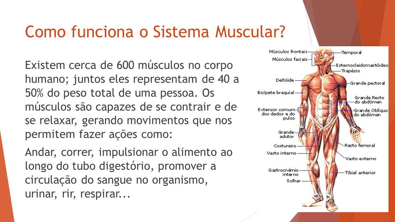 Sistema Muscular. - ppt video online carregar