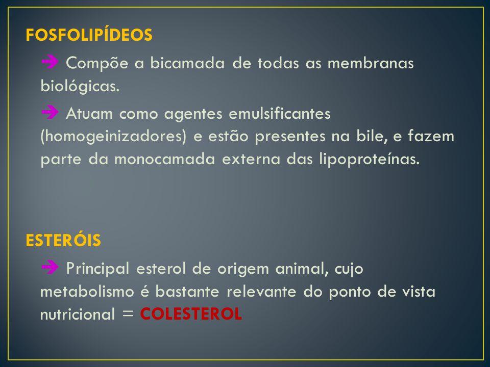 FOSFOLIPÍDEOS  Compõe a bicamada de todas as membranas biológicas.