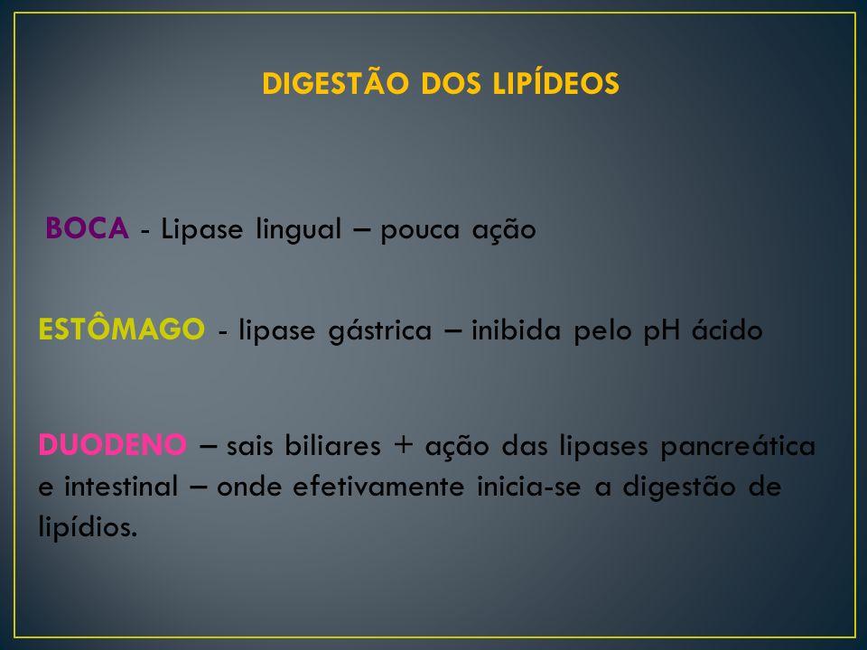 DIGESTÃO DOS LIPÍDEOS BOCA - Lipase lingual – pouca ação. ESTÔMAGO - lipase gástrica – inibida pelo pH ácido.