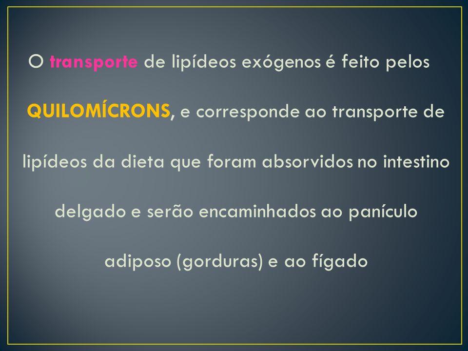 O transporte de lipídeos exógenos é feito pelos QUILOMÍCRONS, e corresponde ao transporte de lipídeos da dieta que foram absorvidos no intestino delgado e serão encaminhados ao panículo adiposo (gorduras) e ao fígado