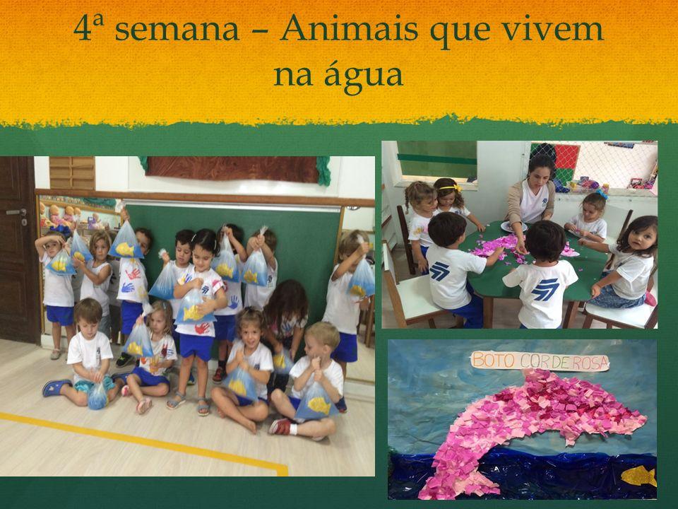 4ª semana – Animais que vivem na água
