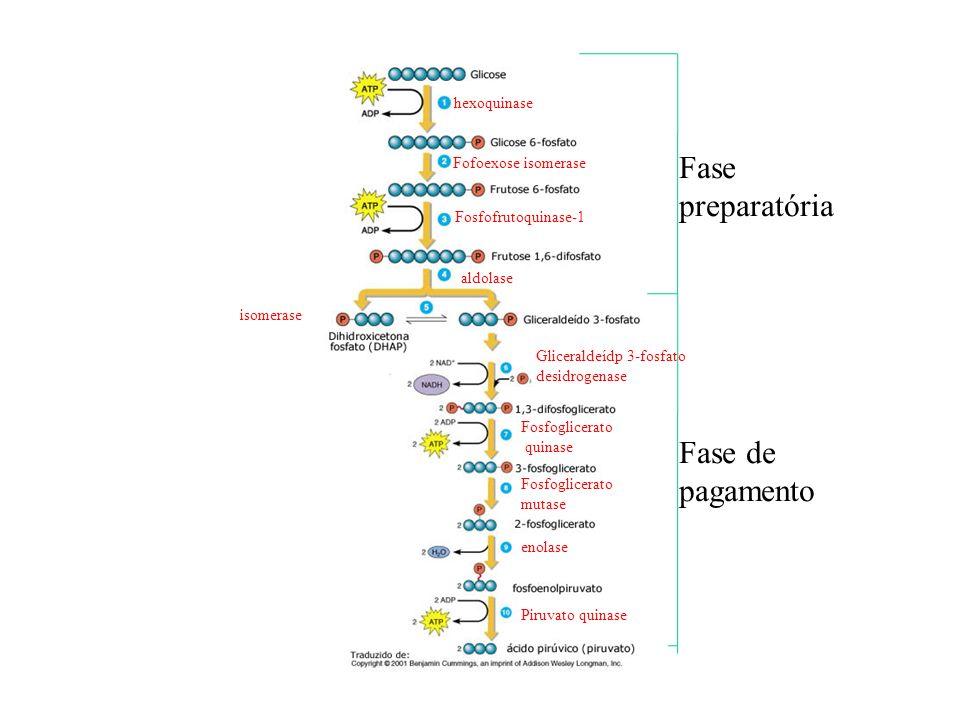 Fase preparatória Fase de pagamento hexoquinase Fofoexose isomerase