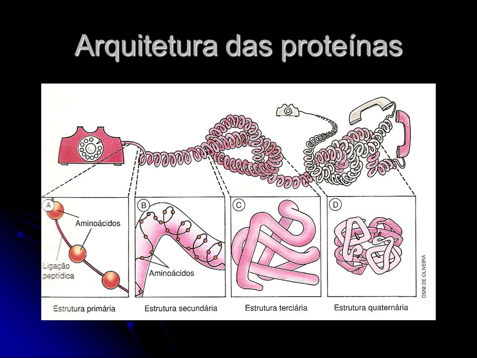 Arquitetura das proteínas