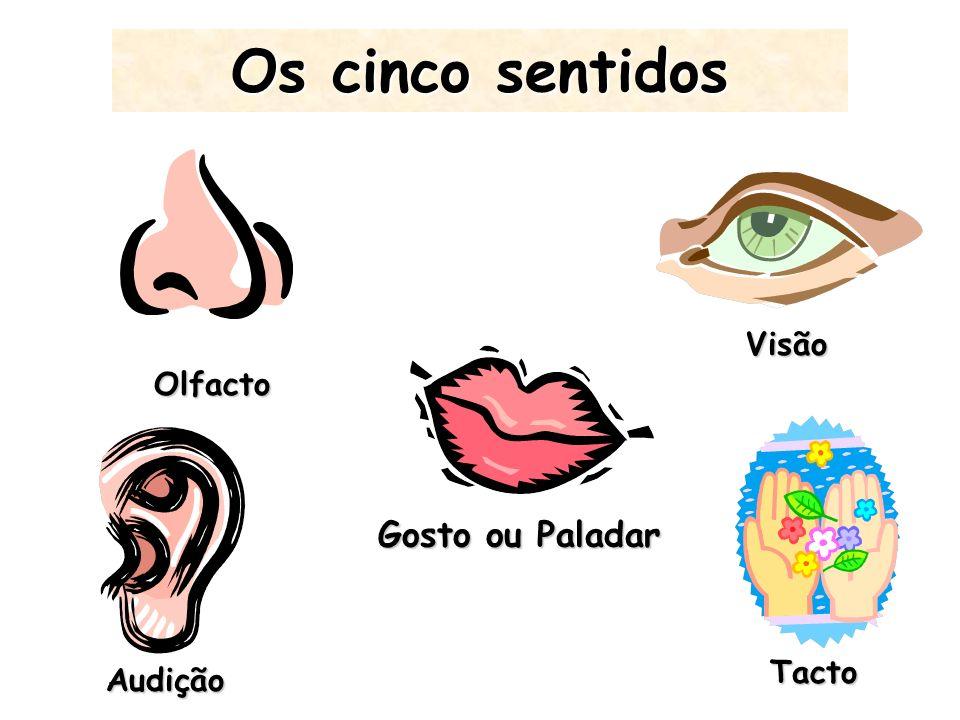 Os cinco sentidos Visão Olfacto Gosto ou Paladar Tacto Audição