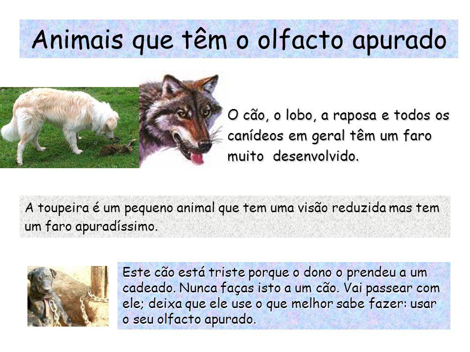 Animais que têm o olfacto apurado
