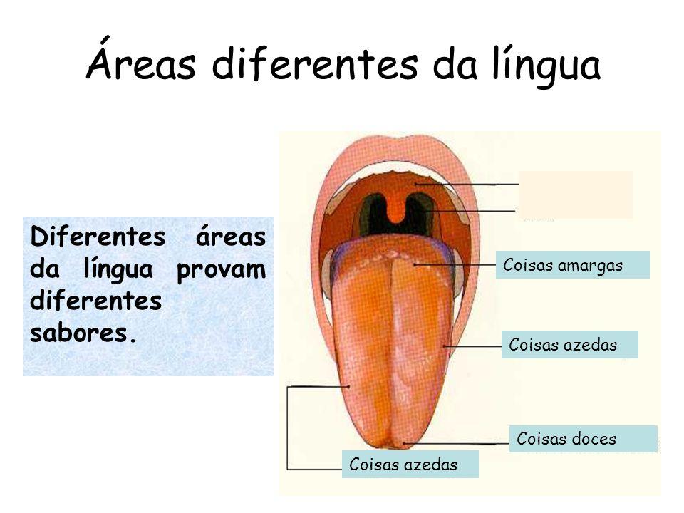 Áreas diferentes da língua