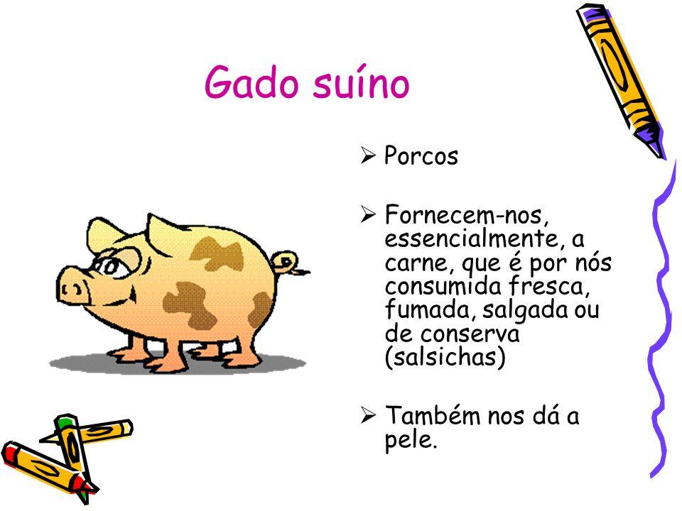 Gado suíno Porcos. Fornecem-nos, essencialmente, a carne, que é por nós consumida fresca, fumada, salgada ou de conserva (salsichas)