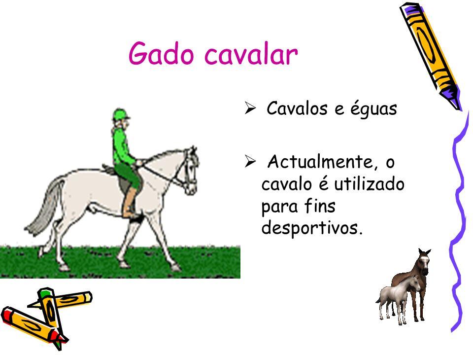 Gado cavalar Cavalos e éguas