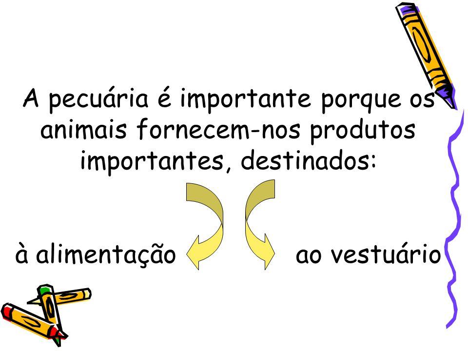 A pecuária é importante porque os animais fornecem-nos produtos importantes, destinados: à alimentação ao vestuário