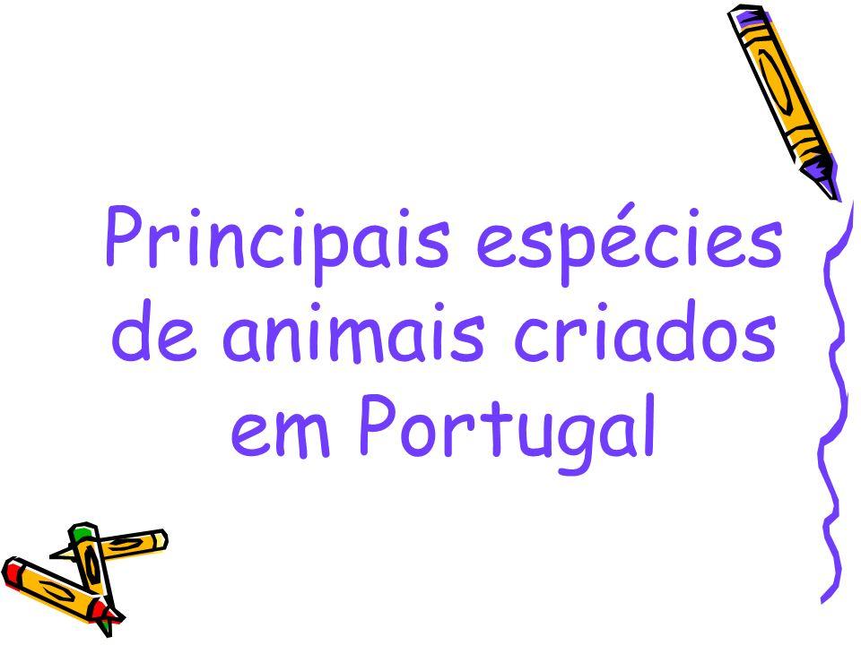 Principais espécies de animais criados em Portugal